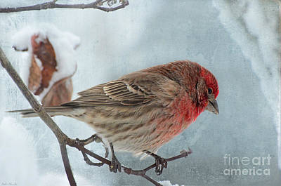 Snow Day Housefinch With Texture Print by Debbie Portwood