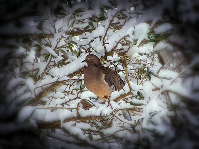 Dove Photograph - Snow Dove by Karen Wiles