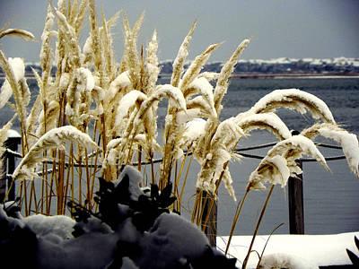Winter Scenes Photograph - Snow Dust by Karen Wiles