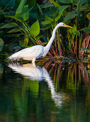 Leaf Photograph - Snow Egret And Its Reflection by Andres Leon