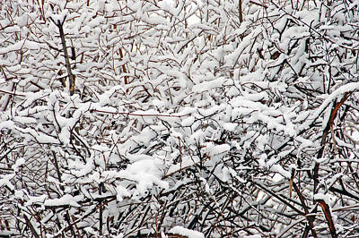 Landscape Photograph - Snow Filled Branches 1 by Aimee L Maher Photography and Art Visit ALMGallerydotcom
