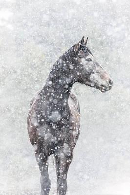 Photograph - Snow Flurry by Pamela Hagedoorn