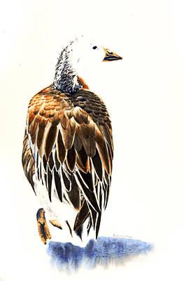 Morph Painting - Snow Goose - Dark Morph Bird by Donna Greenstein