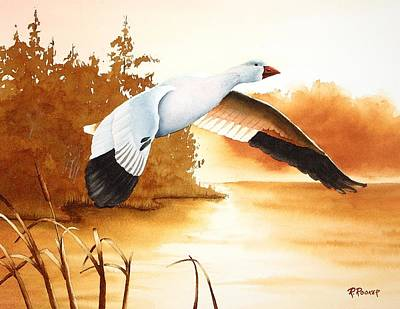 Snow Geese Painting - Backwater Cove by Richard Rooker