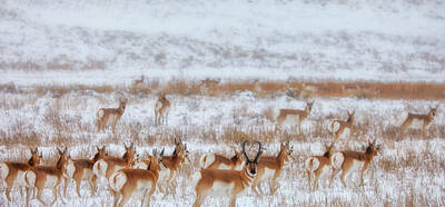Ice Photograph - Snow Grazers by Darren  White