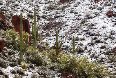 Snow In The Desert Print by Rick Furmanek