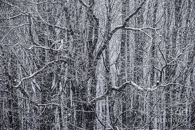 Snow In The Forest Print by Diane Diederich