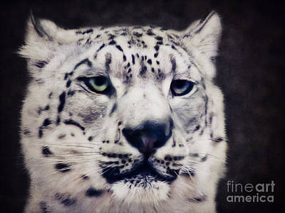 Leopard Mixed Media - Snow Leopard by Angela Doelling AD DESIGN Photo and PhotoArt