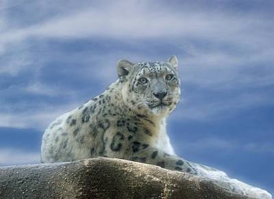 Leopard Digital Art - Snow Leopard by Sandy Keeton