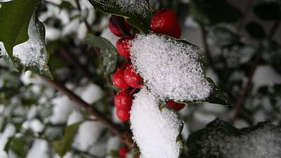 Snowstorm Mixed Media - Snow On Holly by V P Holmes