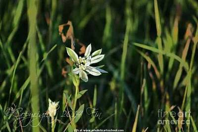 Photograph - Snow On The Mountain Wildflower by PainterArtist FIN