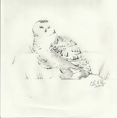 Maine Winter Drawing - Snow Owl In Field by Christopher Hughes