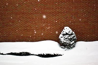 Tim Buisman Photograph - Snow Wall by Tim Buisman