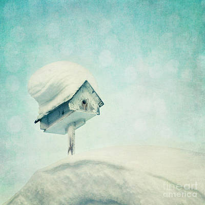 Blueish Photograph - Snowbird's Home by Priska Wettstein