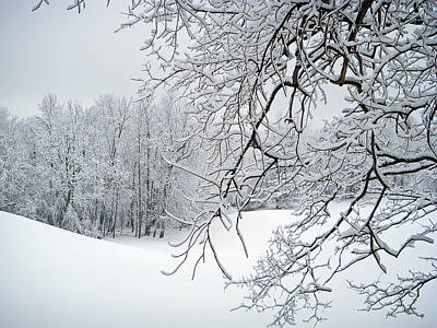 Snowy Branches Print by Aimee L Maher Photography and Art Visit ALMGallerydotcom