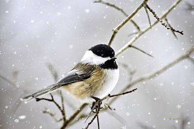 Snowy Digital Art - Snowy Chickadee Bird by Christina Rollo