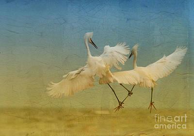 Snowy Egret Dance Print by Deborah Benoit