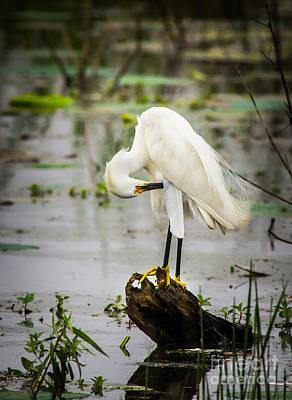 Birds Photograph - Snowy Egret In Swamp by Robert Frederick