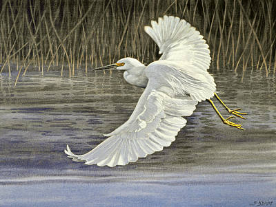 Marshes Painting - Snowy Egret by Paul Krapf