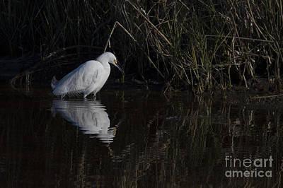 Snowy Egret Print by Twenty Two North Photography