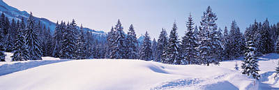 Snowy Field & Trees Oberjoch Germany Print by Panoramic Images