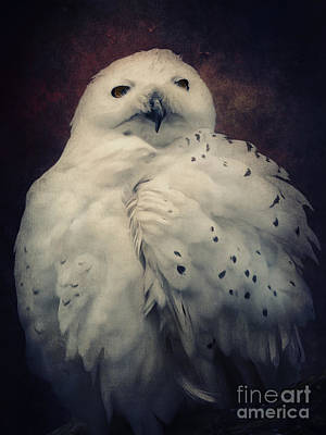 Owl Mixed Media - Snowy Owl by Angela Doelling AD DESIGN Photo and PhotoArt