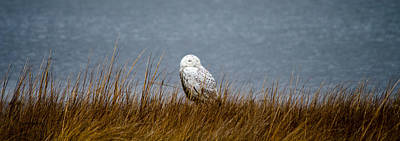 Owl Photograph - Snowy Owl Sitting by Crystal Wightman