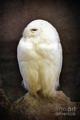 Hunters Photograph - Snowy Owl Vintage  by Jane Rix