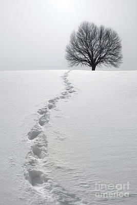 Footprints Photograph - Snowy Path by Diane Diederich