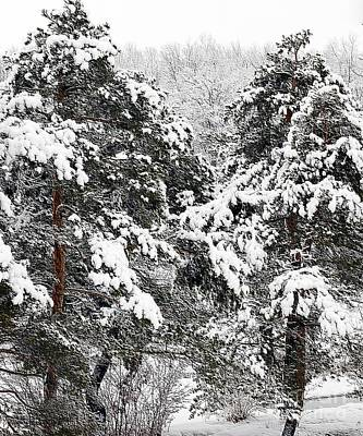Snowy Pines Print by Kathleen Struckle