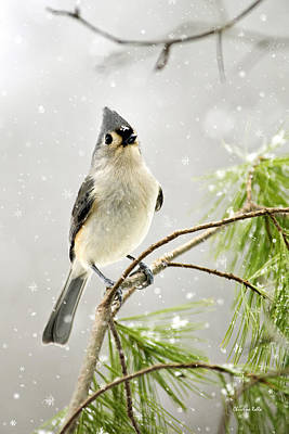Cute Bird Digital Art - Snowy Songbird by Christina Rollo