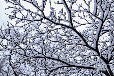Snowy Tree Print by Elena Elisseeva