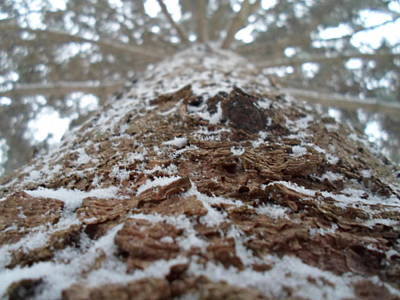 Photograph - Snowy Tree by Jenna Mengersen