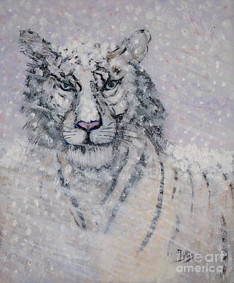 Snowy White Tiger Or Chairman Of The Board Print by Phyllis Kaltenbach
