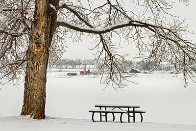 Bench Photograph - Snowy Winter Country Cottonwood Tree Landscape View by James BO  Insogna