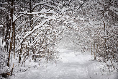 Snowy Winter Path In Forest Print by Elena Elisseeva