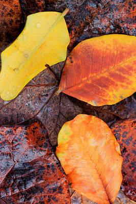 So Cal Autumn Print by Heidi Smith