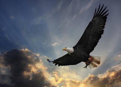 American Eagle Photograph - Soar To New Heights by Lori Deiter
