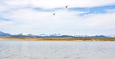 Crowley Lake Photograph - Soaring Above Crowley Lake by Marilyn Diaz