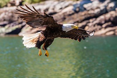 Soaring Eagle Print by Ian Stotesbury