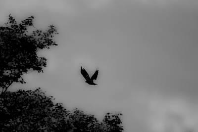 Photograph - Soaring by Edward Kay