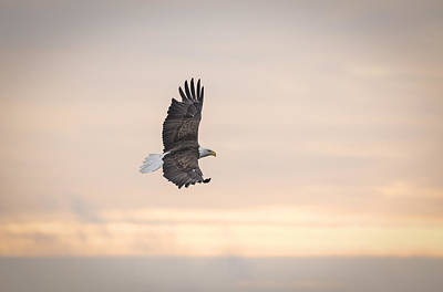 Tommytrout Photograph - Soaring Into The Sunrise by Thomas Young