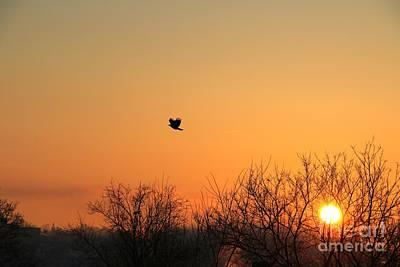 Photograph - Soaring Sunrise 1 by Jay Nodianos
