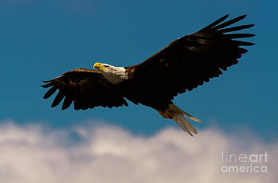 Soaring To Greater Heights Print by Heidi Piccerelli