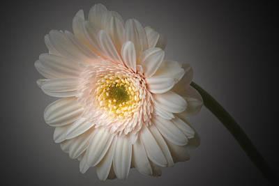 Soft Light. Original by Terence Davis