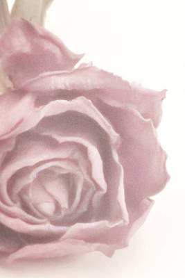 Interior Design Art Photograph - Soft Pink Dried Rose by Sandra Foster