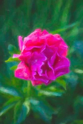 Mazama Mixed Media - Soft Pink Peony by Omaste Witkowski