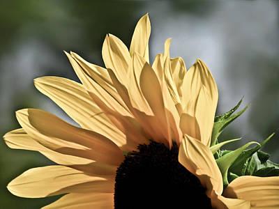 Yellow Photograph - Soft Sunny Sunflower by Eva Kondzialkiewicz