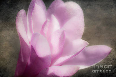 Soft Violet Flower - Greensboro North Carolina Print by Dan Carmichael