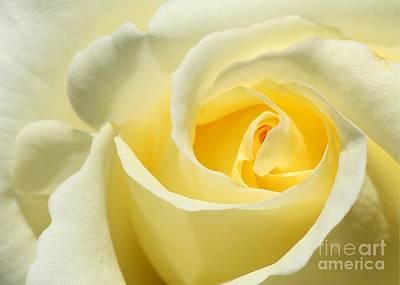 Soft Yellow Rose Print by Sabrina L Ryan